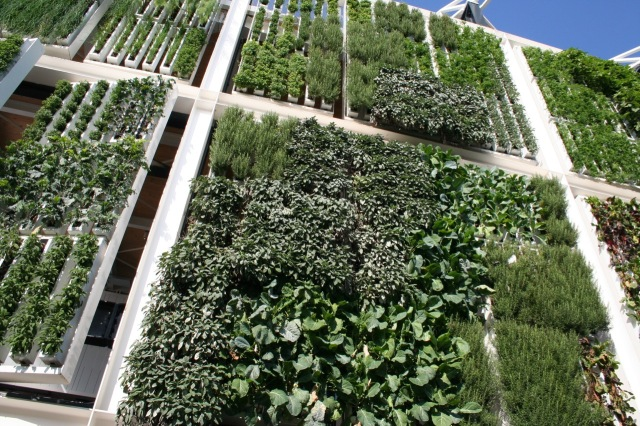 This vertical green veggie and herb garden tracked the sun