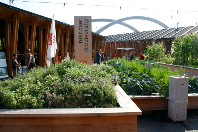 Slow Food Pavilion -plant beds