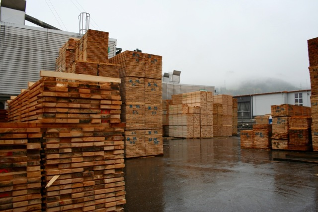 Cut timber awaiting processing